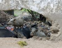7551698-In_the_village_Chittaurgarh.jpg