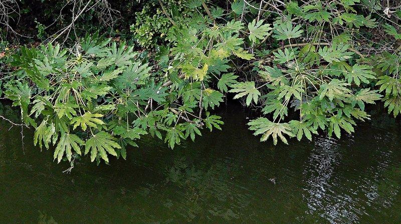 NEW RIVER WALK: foliage