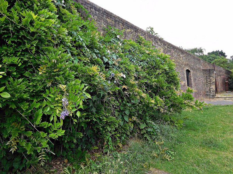 Pymmes walled garden