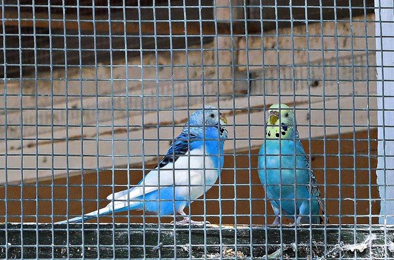 Pinner Memorial Park aviary