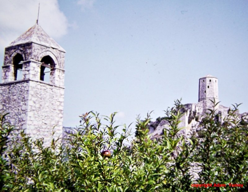 A pomegranate at Pocitelj (in 1975)