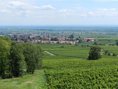 587479895901137-Vineyard_vie..land_Pfalz.jpg