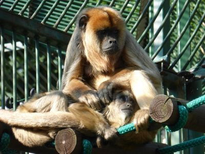 7173104-Animals_at_the_Zoo_Wroclaw.jpg