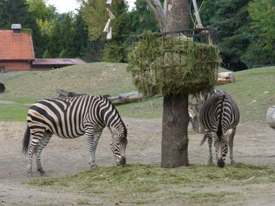 7173105-Animals_at_the_Zoo_Wroclaw.jpg