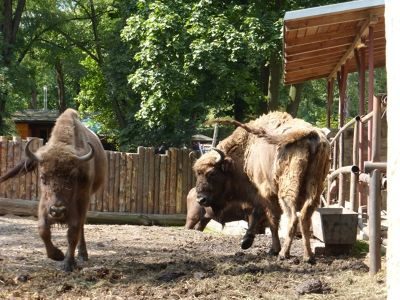 7173107-Animals_at_the_Zoo_Wroclaw.jpg