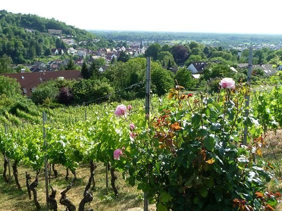 large_5083485-View_from_the_vineyards_Weingarten.jpg