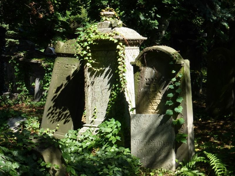 large_7155448-Jewish_Cemetery_Wroclaw.jpg