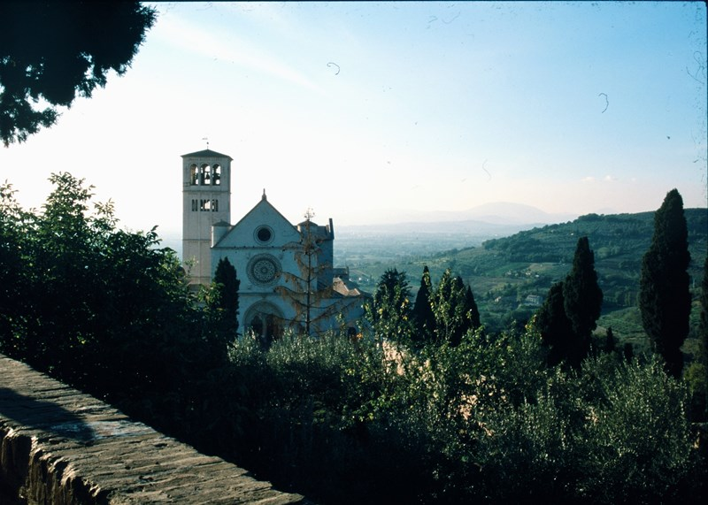 large_assisi1.jpg