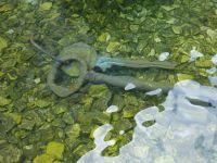 211837717168613-Fountain_of_..es_Wroclaw.jpg