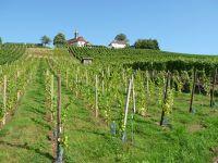 463078836755967-Walk_Up_Berg..Gengenbach.jpg
