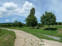 4881047-Paths_in_the_vineyards_Wissembourg.jpg