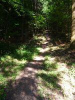 5816953-The_trail_Gaggenau.jpg