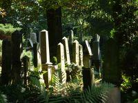 7155449-Jewish_Cemetery_Wroclaw.jpg