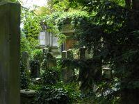 7156858-Jewish_Cemetery_Impressions_1_Wroclaw.jpg