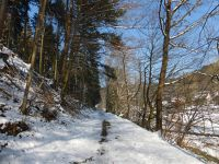 7299028-Hiking_In_The_Black_Forest.jpg