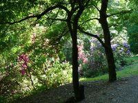 874753995074966-Rhododendron.._Gernsbach.jpg