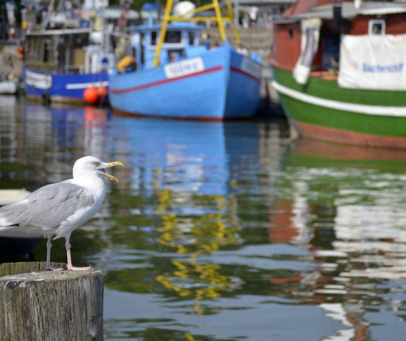 Sassnitz Harbour