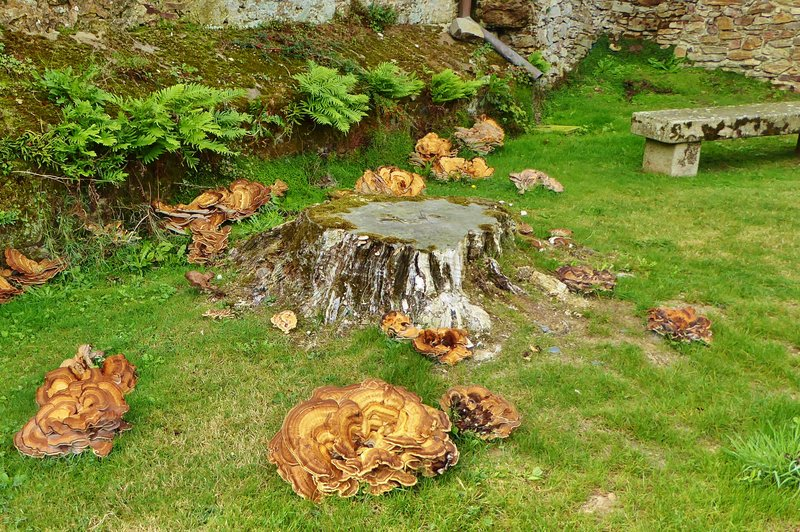 Giant mushrooms at Abbatiale Déas in Saint-Philbert-de-Grand-Lieu