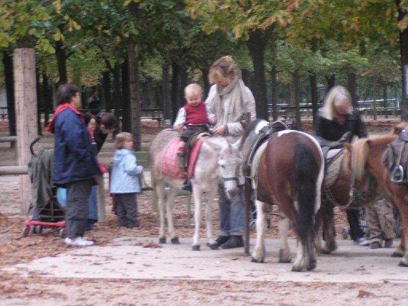 Luxembourg Gardens, pony rides - Paris