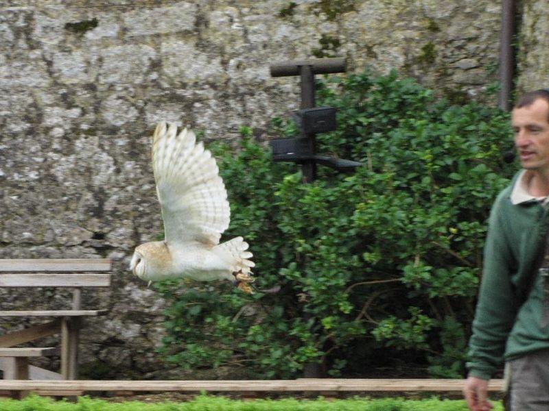 Raptor Show at Château des Milandes in the Dordogne