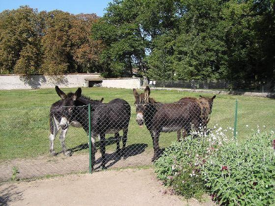 Donkeys at Château Chenonceau farm