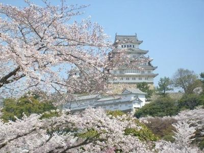 Himechi castle through the blossom - Japan