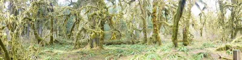 the hall of mosses, panoramic view