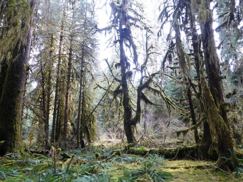 the hall of mosses