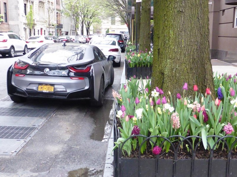 tulips (and a formidable BMW) for the bald & the beautiful