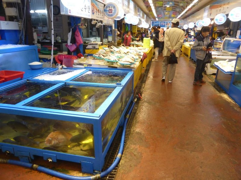 fish market of Jeju