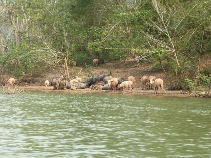 on the shores of the Nam Ou river