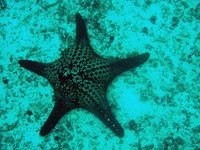 Galapagos - Sea star