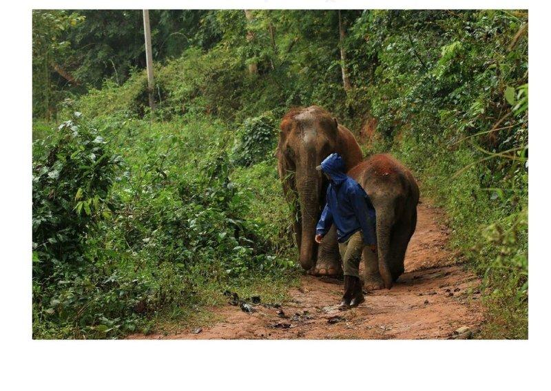 Elephant Freedom-33