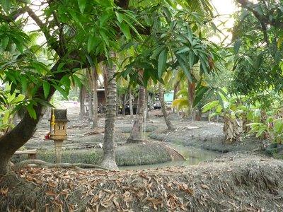a kókuszültetvény vízellátása kanyargós technikával