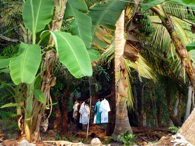 frissen mosott és terített ruha a hűs banánfa levelek alatt