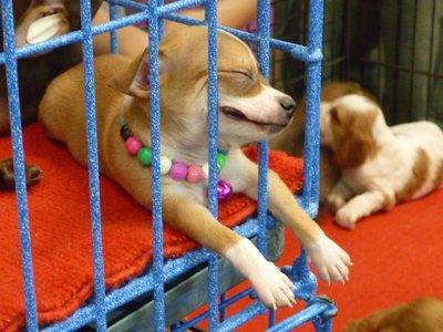 egy a kutyuk közül, kaján mosollyal az arcán