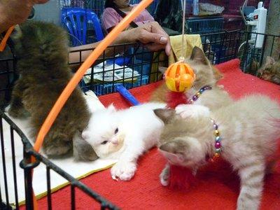 meg a cicukok