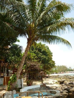 az egyetlen pálmafa, amit a parton találtunk
