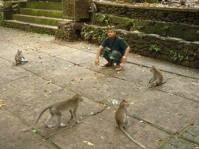 a személyzet és a majmok