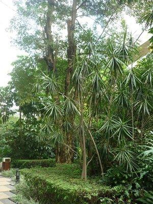 a buja dzsungel medencéket rejt