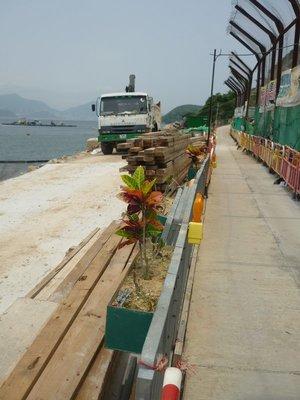 a hong kongiak adnak az építkezés esztétikumára, az elkerített rész végig volt ilyen növénnyel lógatva