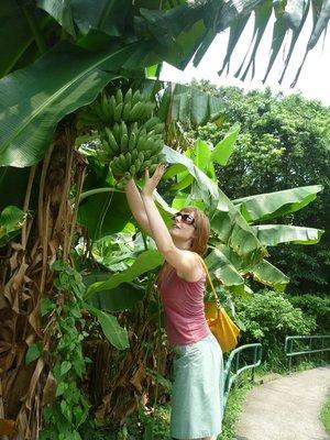 a banántolvaj