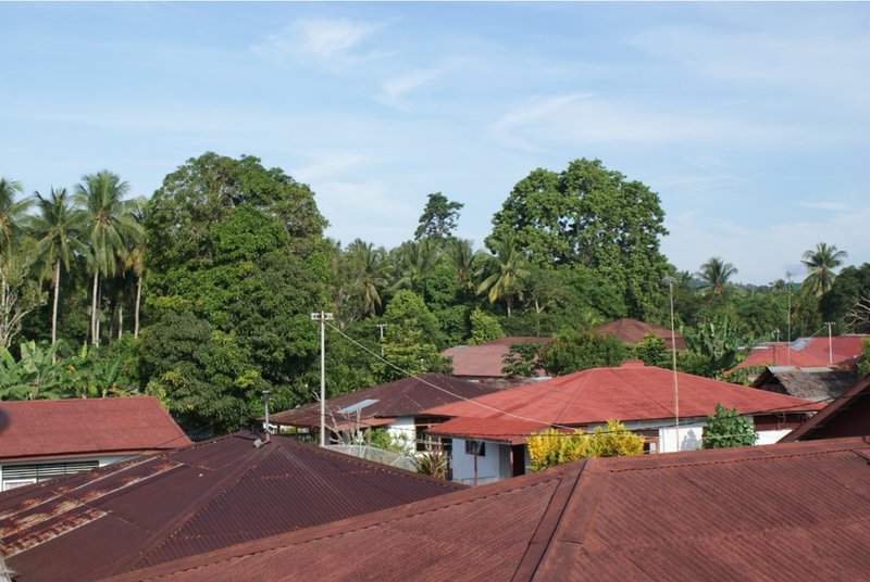 Great trees over roofs village Ihamahu