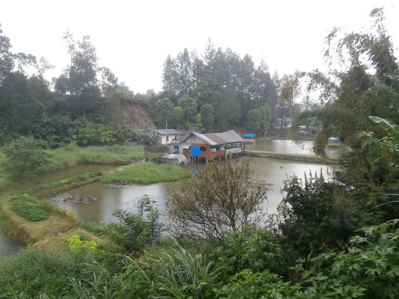 Little fispond dekat resto Batak Sidikalang