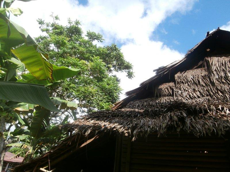 Pohon dan Rumah tua