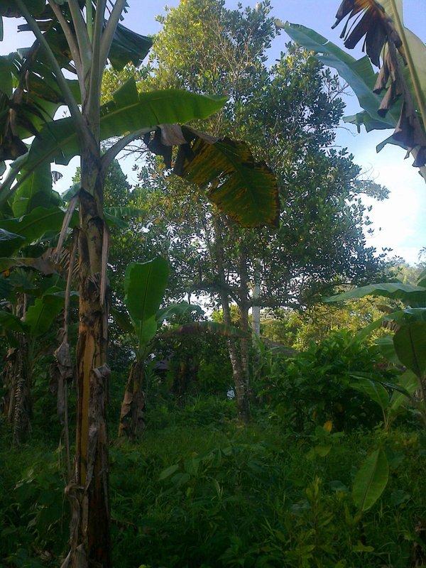 Tropical Garden belakang Rumah