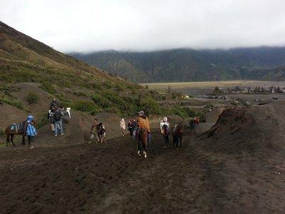 Bromo horses