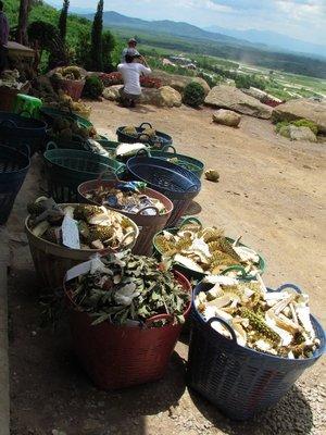 Durian shells