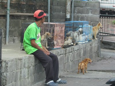 Dogs for sell
