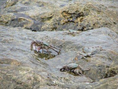 Balinese crabs